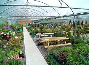 Corachie Clematis Garden Centre Polytunnel